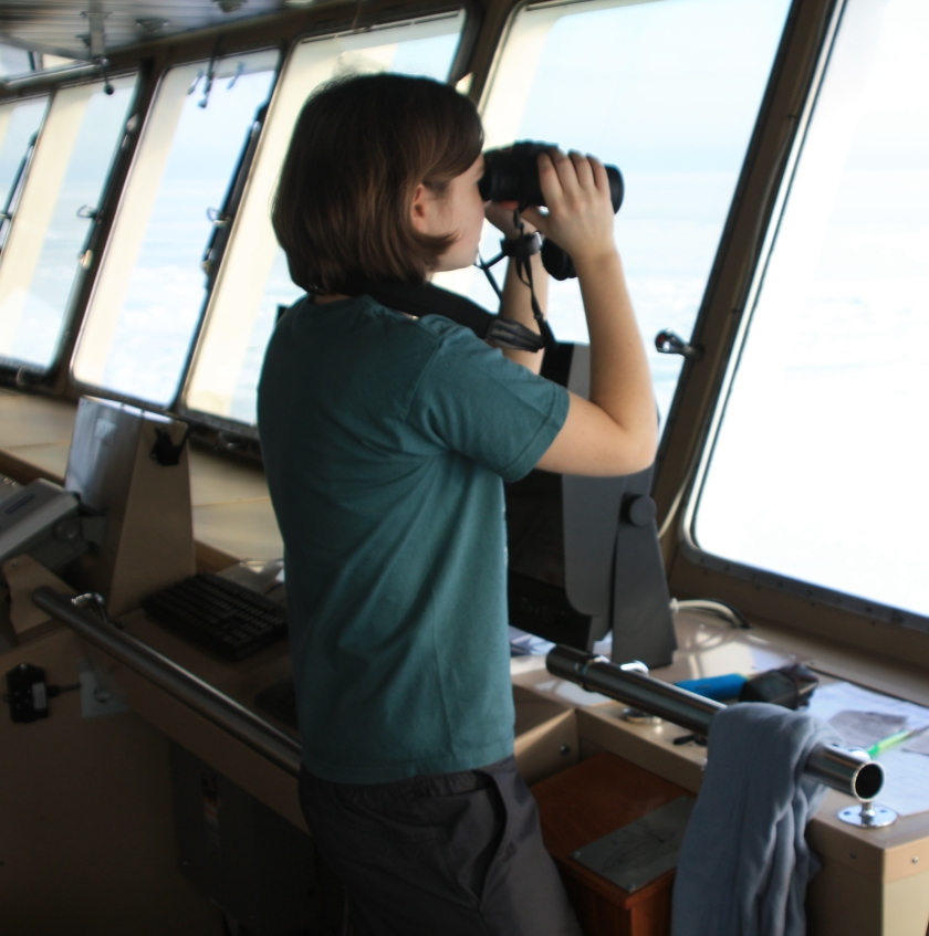 Seal observer on the bridge of an icebreaker scans for seals
